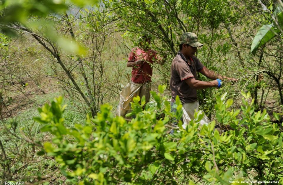 Cada día en Colombia aumentan los cultivos de cocaína: Naciones Unidas
